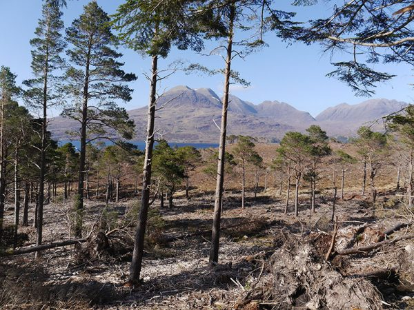 Torridon Mountain